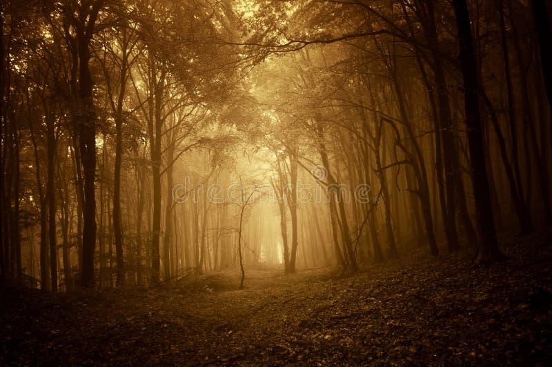 Mörk spöklik skog med dimma i höst på soluppgång arkivfoto