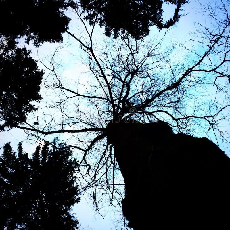 mörk tree royaltyfri foto