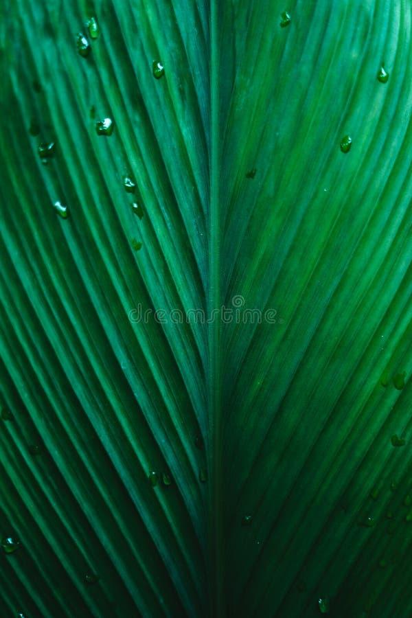 Mörk yttersida för blad för droppe för sidabakgrundsvatten arkivfoto