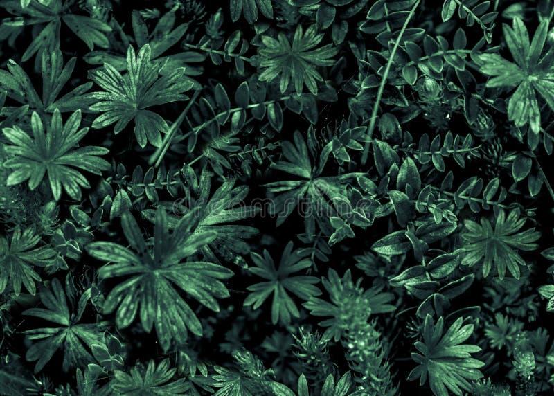 Mörka Flora Photo royaltyfri illustrationer