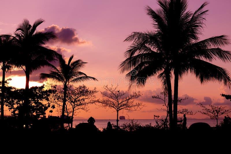 Mörka konturer av palmträd och en yacht på waten och amazien royaltyfri foto