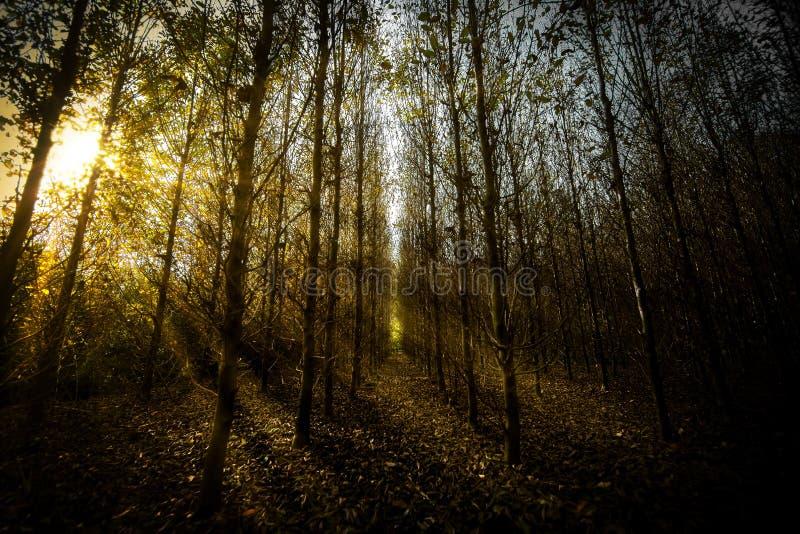 Mörka skogsolstrålar royaltyfri bild