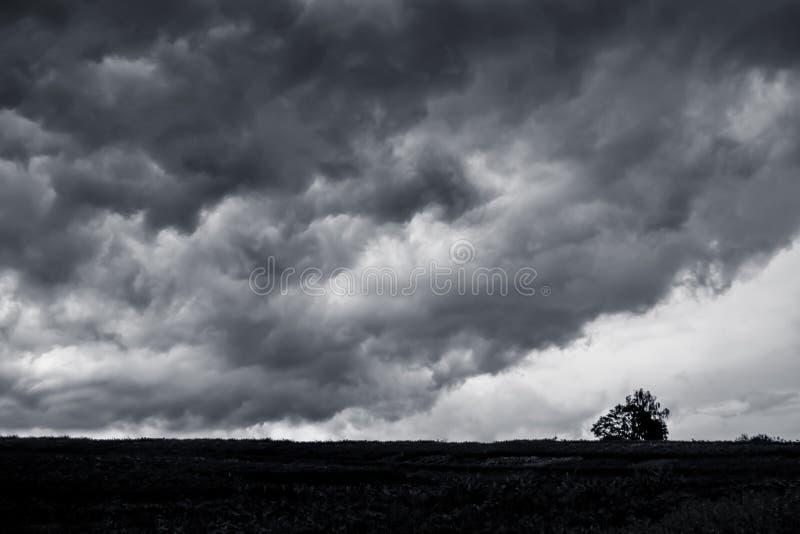 Mörka stormiga moln över det vanliga ensamma trädet i fältet in för fotografering för bildbyråer