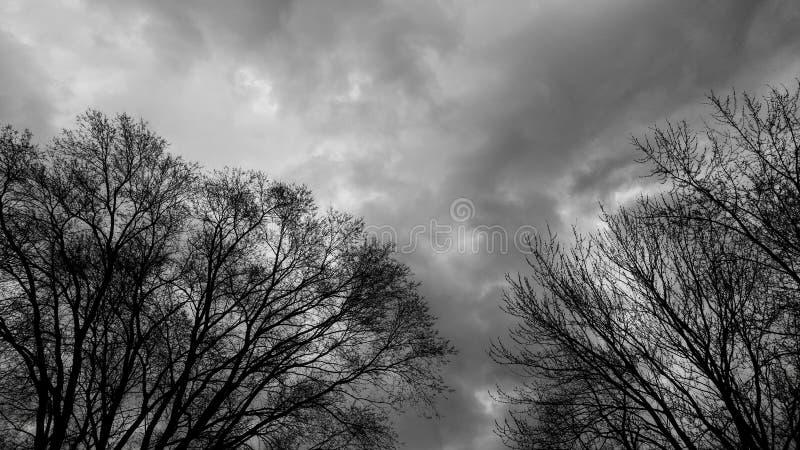 Mörka stormmoln med avlövade trädfilialer arkivbilder
