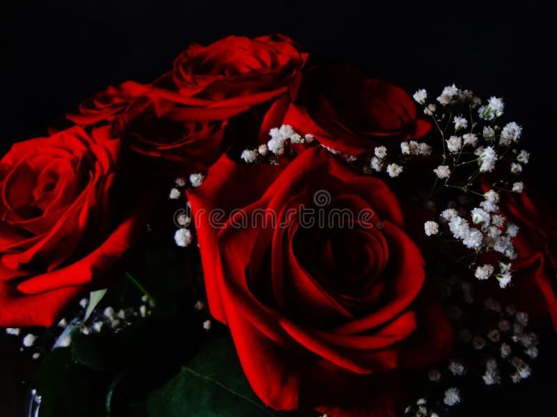 Mörker - bukett och gypsophila för röda rosor arkivfoton