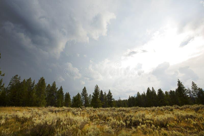 Mörker fördunklar över malört och sörjer träd, Jackson Hole, Wyoming royaltyfri fotografi