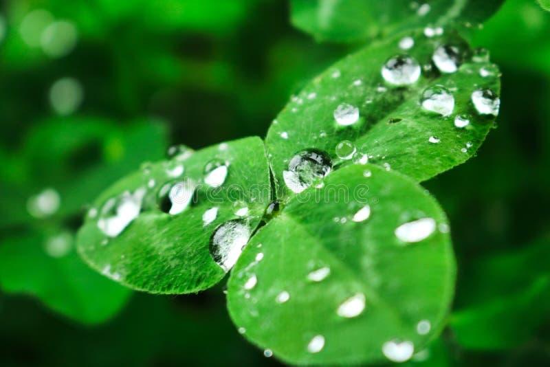 Mörker - gräsplansidor efter regn med droppar av vatten! fotografering för bildbyråer