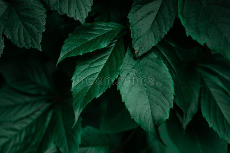 Mörker - grön lövverkbladbakgrund royaltyfri bild