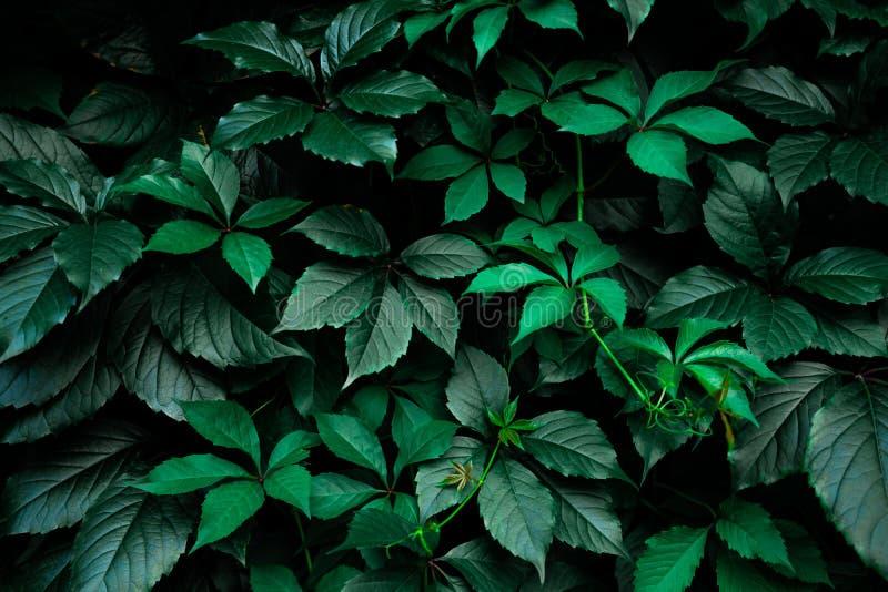 Mörker - grön lövverkbladbakgrund royaltyfri fotografi