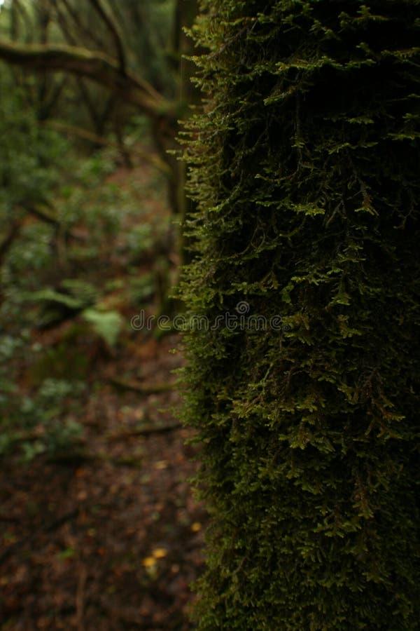 Mörker - grön mossa på stammen royaltyfria foton