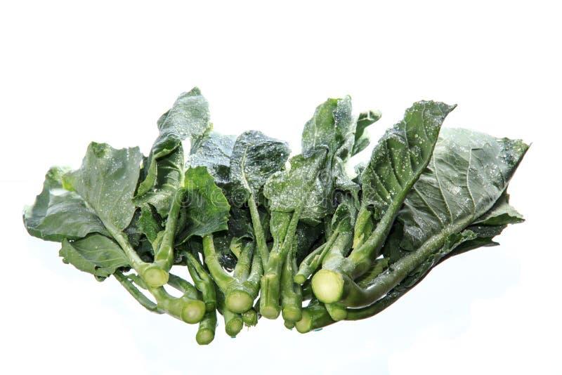 Mörker - gröna lövrika grönsaker royaltyfri fotografi