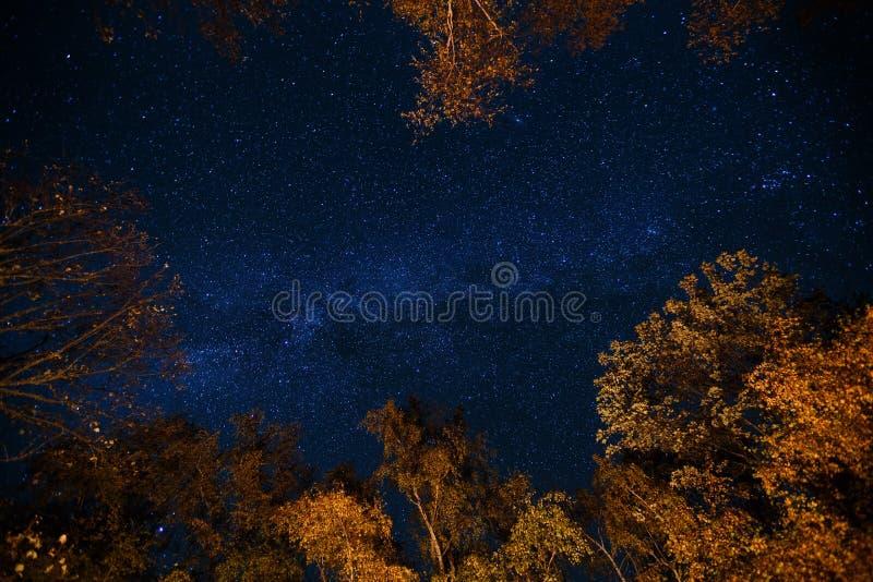 Mörker - stjärnklar himmel för blå natt ovanför gåtahöstskogen med apelsin- och gulingträd Långt exponeringsfoto av mjölkaktigt royaltyfria foton