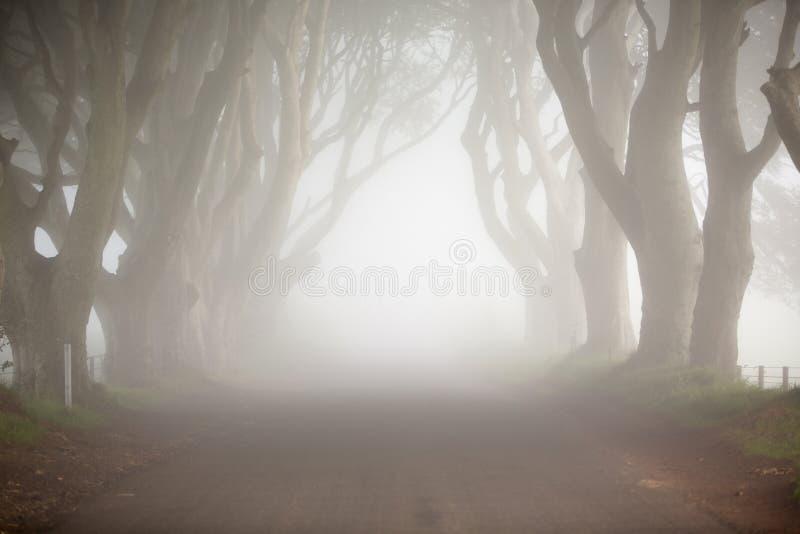 Mörkerhäckar, norr Irland, mystikerträdlinje drev och dimma arkivbild