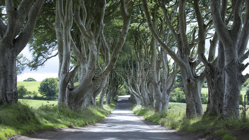 Mörkret slingra sig - nordligt - Irland royaltyfri fotografi