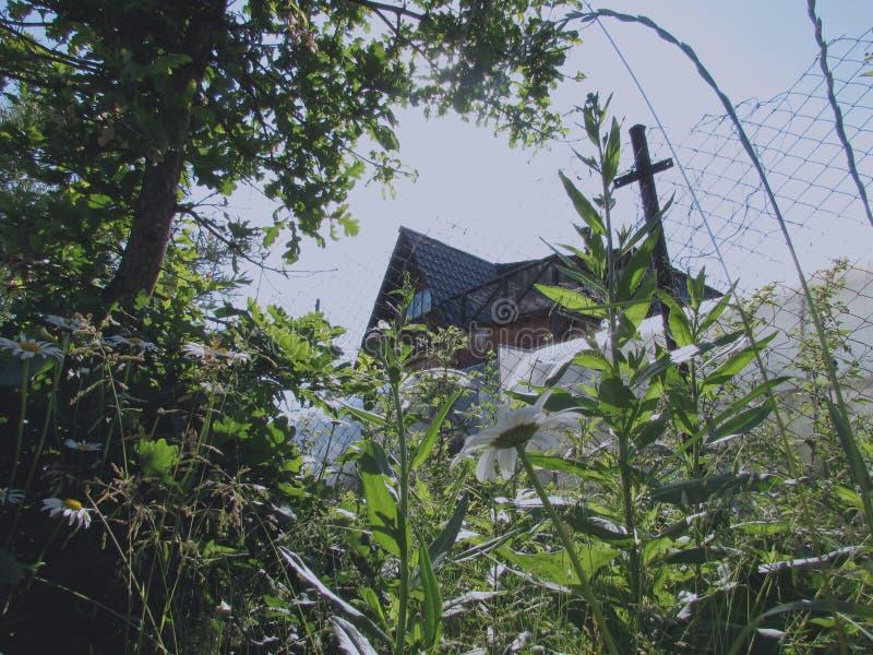 Mörkt brunt landshus bak staketet bak gröna växter, buskar, träd och gräs på en solig sommardag royaltyfria foton