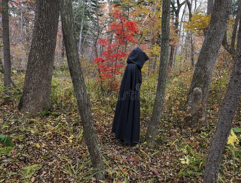 Mörkt diagram i skogen 2 royaltyfria bilder