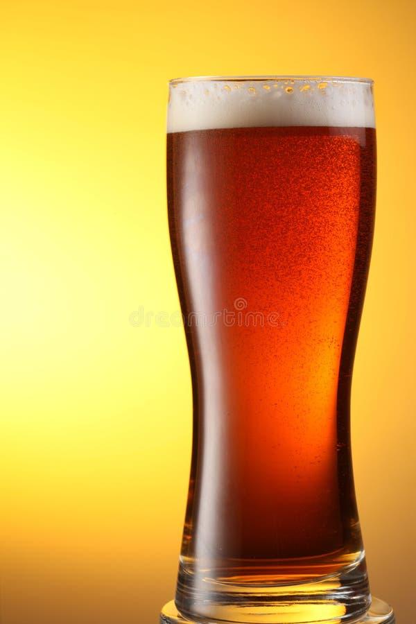 mörkt exponeringsglas för öl fotografering för bildbyråer