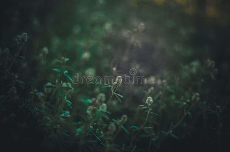 Mörkt - grön bakgrund med ett stort fritt område för text och design Skoggräs i lågt solljus Selektivt fokusera arkivbilder