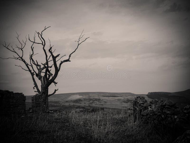 Mörkt kusligt träd i ett skogskott i svartvitt - perfekt för fasaartiklar och bakgrunder arkivfoto