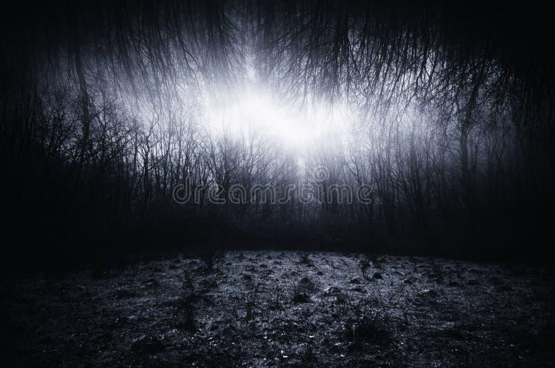 Mörkt overkligt landskap med ängen och den oändliga skogen royaltyfri foto