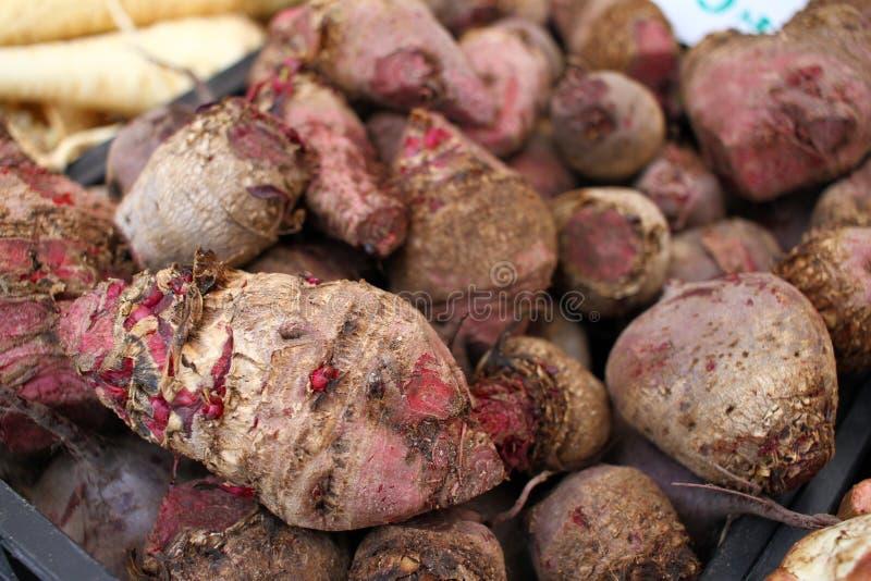 Mörkt - röd rödbeta Beta rotar full rambakgrundstextur Rödbetatapet Ny organisk vegetarisk grönsakrödbeta fotografering för bildbyråer