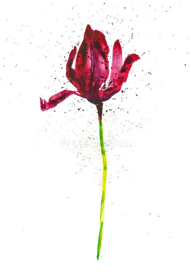 Mörkt - röd tulpan bland abstrakta droppar Vattenf?rgillustration som isoleras p? vit bakgrund arkivfoton