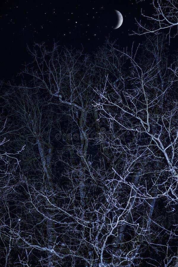 Mörkt träd på skymning royaltyfri foto