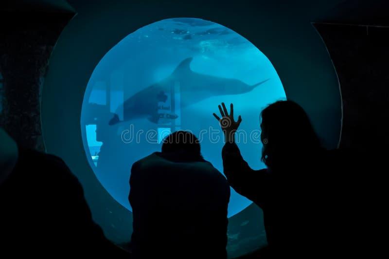 Möte av en delfin och av ett folk i en delfinarium royaltyfri fotografi