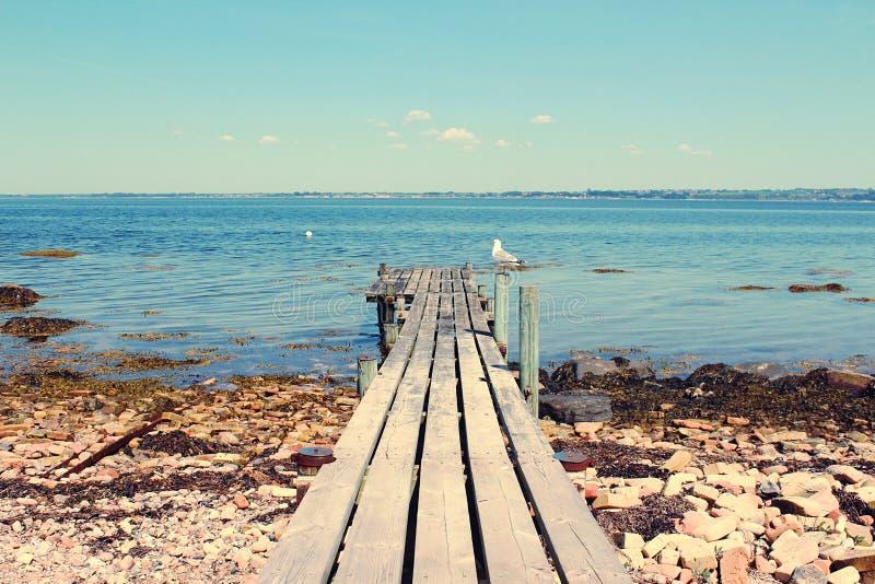 Möve auf einer Holzbrücke in der Sommersaison schweden - schönes Ba lizenzfreie stockfotografie