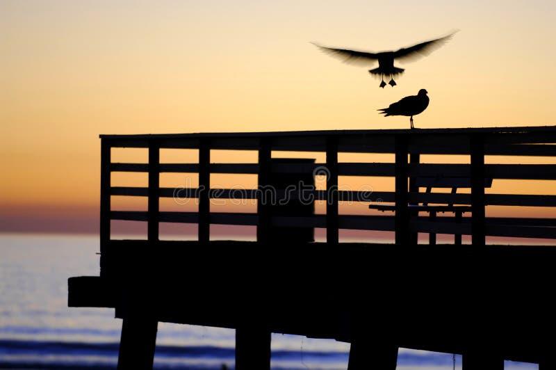 Möve-Landung, Sonnenuntergang auf dem Pier stockfotografie