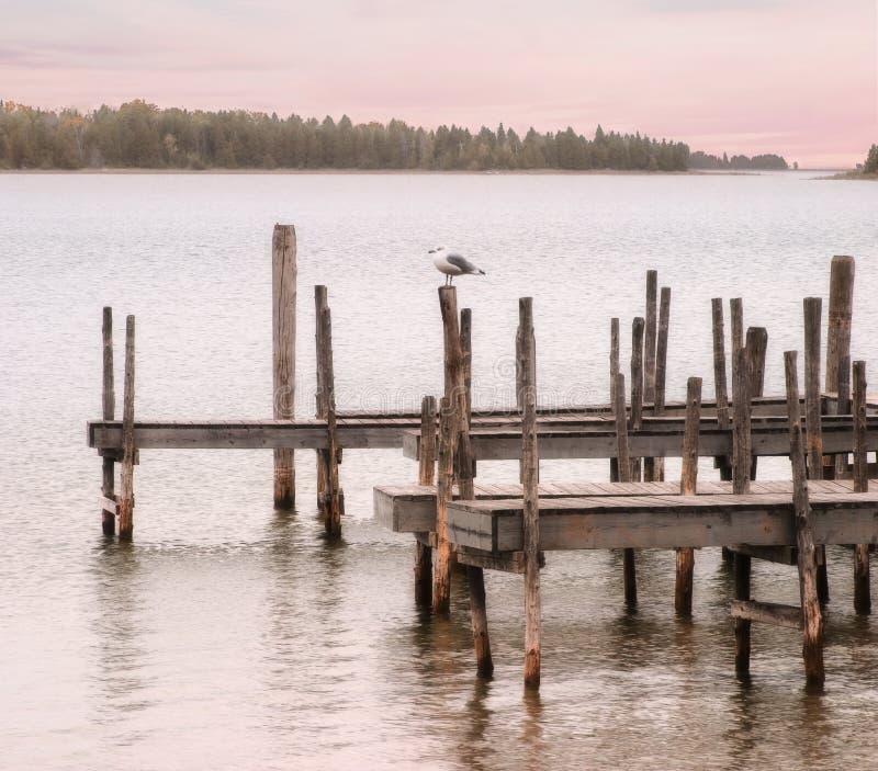 Möve und Dock stockfotos