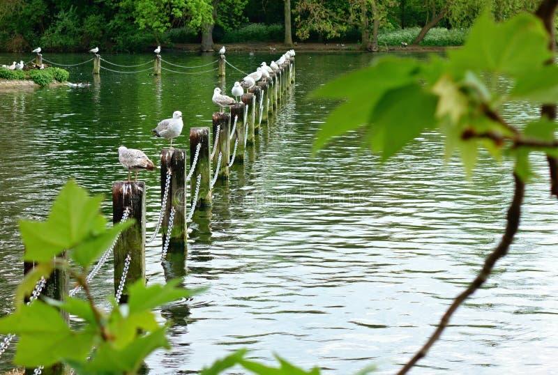 Möven auf dem See stockfotografie
