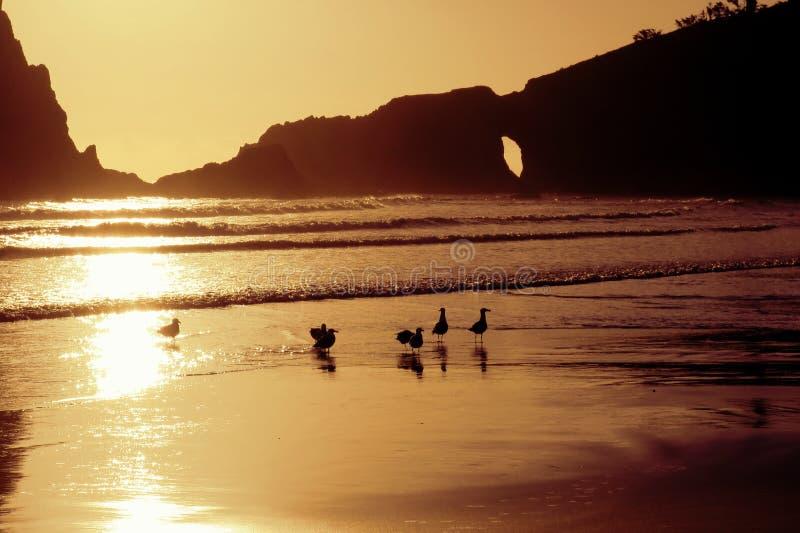 Möven auf dem Strand bei Sonnenuntergang lizenzfreie stockfotos