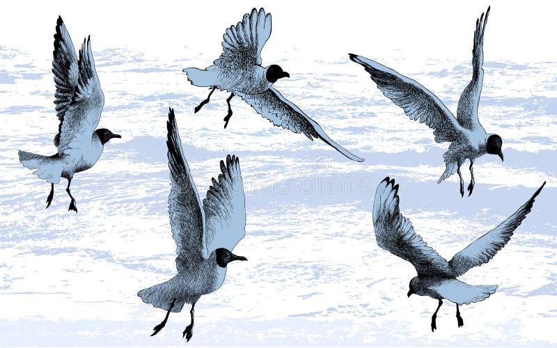 Möven, Seemöwen, Vögel, die auf Meerwasserhintergrund, Vektorillustrationszeichnung fliegen stock abbildung