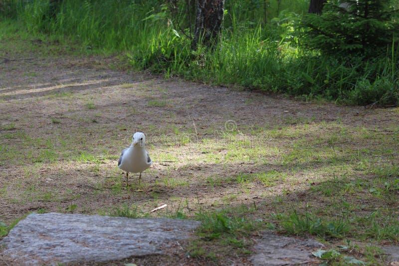 Mövenvogel stockbilder