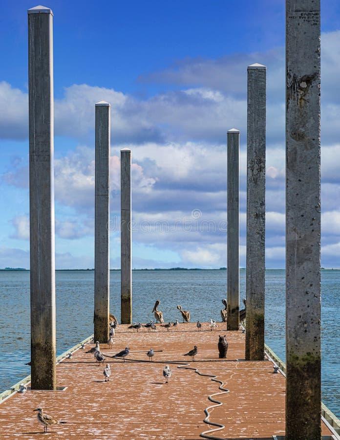 Möwen und Pelikane auf dem Pier lizenzfreies stockbild