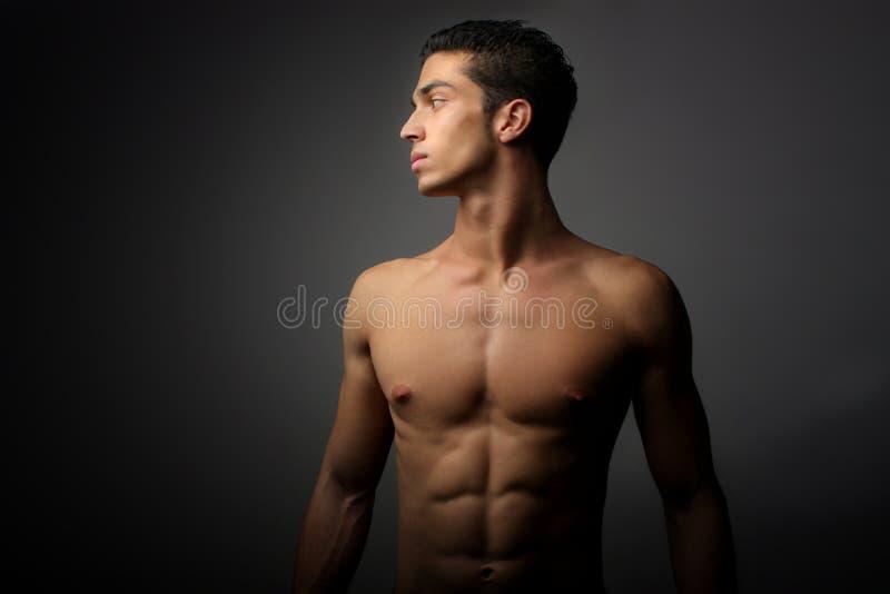 Músculo imagens de stock
