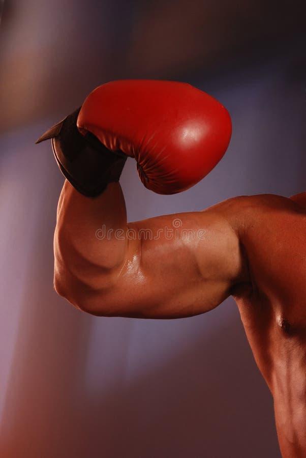Músculo del boxeo fotografía de archivo libre de regalías