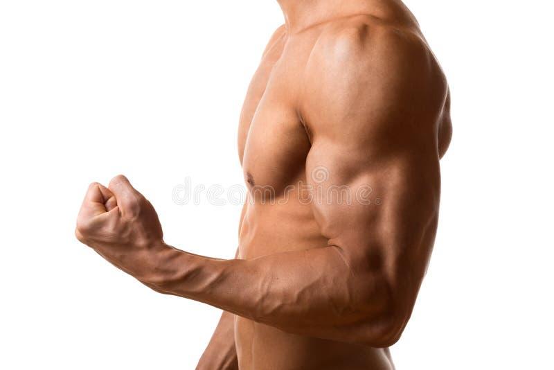 Músculo do bíceps do homem novo fotografia de stock