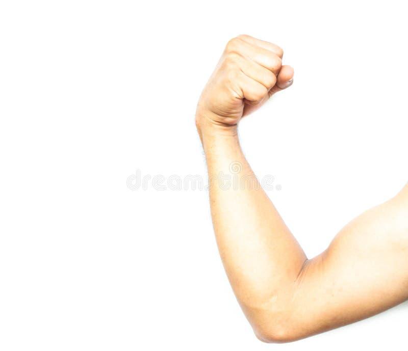 Músculos de la flexión de los brazos de la demostración en el fondo blanco foto de archivo