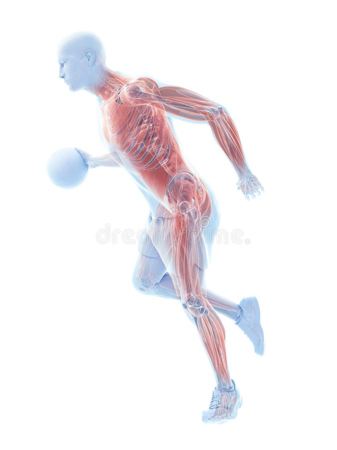 Músculos dos jogadores de basquetebol ilustração do vetor