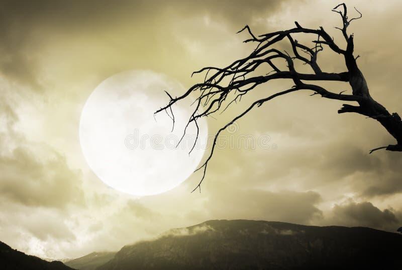Música de la noche Montañas y árbol fantasmagóricos con la Luna Llena imagenes de archivo