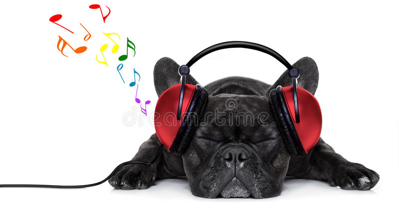 Música del perro imagenes de archivo
