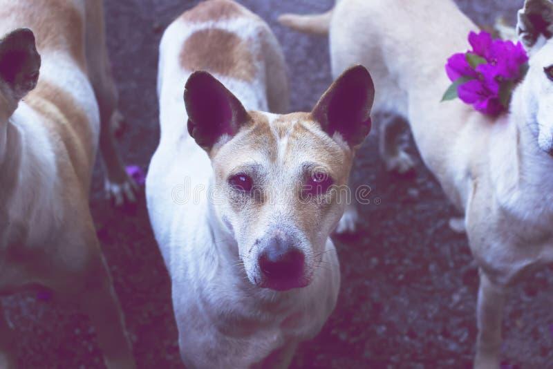 Müde Augen eines streunenden Hundes auf der Straße lizenzfreie stockfotos