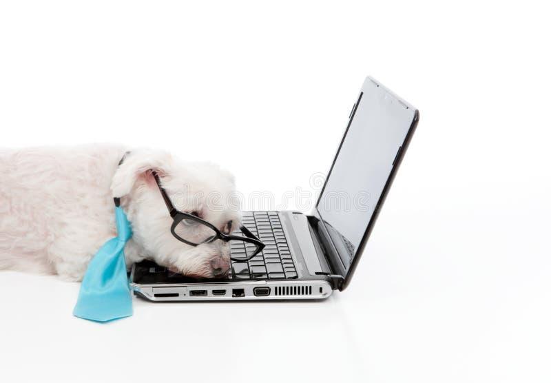 Müder überarbeiteter Hundeschlaf-Computerlaptop stockfotos