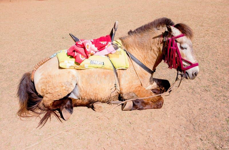 Müdes Pferd Schlafens mit Sattel auf Sonnenglanz lizenzfreie stockfotos