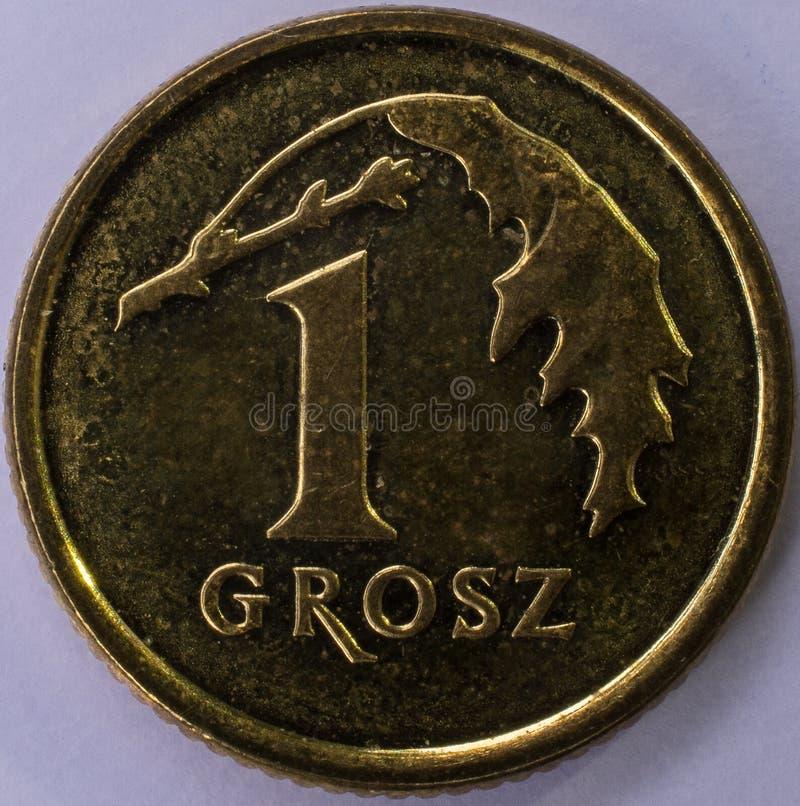 Münze 1 Grosz-Front lizenzfreie stockfotografie