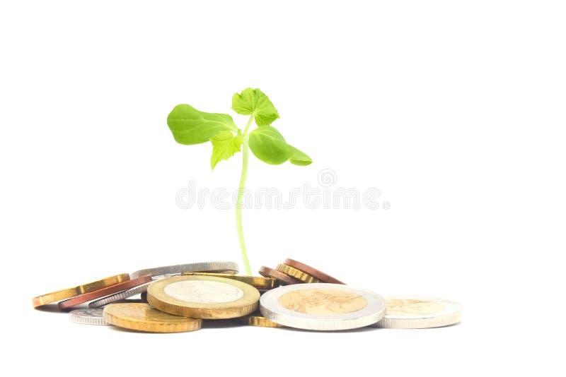 Münzen getrennt auf Weiß Jüdisches Nächstenliebekonzeptfoto Tzedakah, übersetzt wie Nächstenliebe Ein Foto des Geldes, Haufen von lizenzfreie stockfotografie