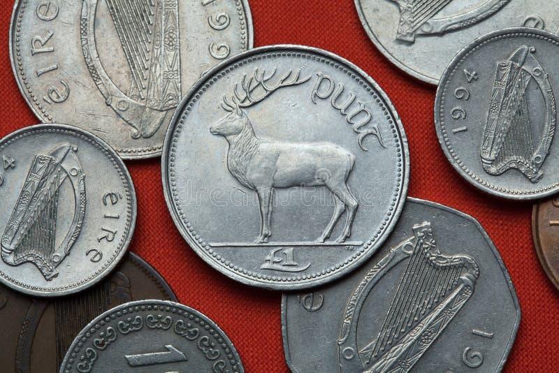 Münzen von Irland Rote Rotwild (Cervus elaphus) lizenzfreies stockbild