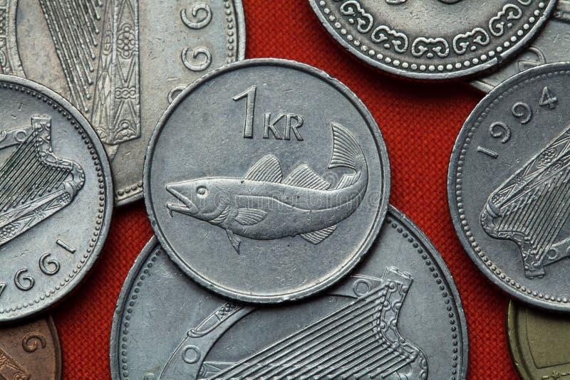 Münzen von Island Dorsch (Gadus morhua) lizenzfreie stockfotografie
